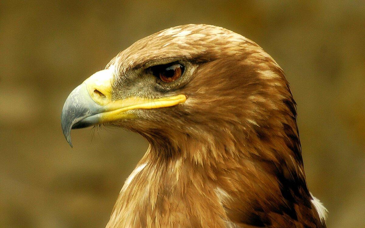 радуга картинки птиц беркуты брили бороды клиентов