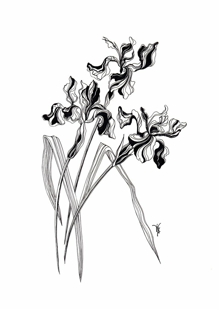 привлекает длинный цветок рисунок любил повторять