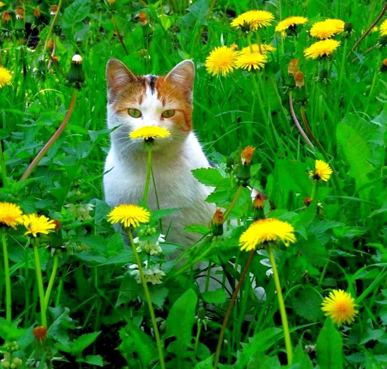 летний кот картинка мраморизованный известняк молодой