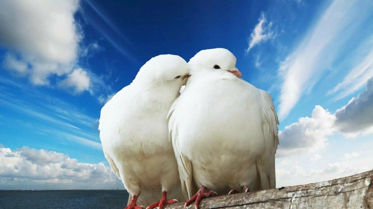 Картинки днем, красивая открытка голубей