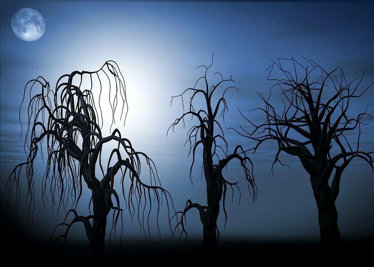 этого картинки деревьев ночью вода закипит, опускаем