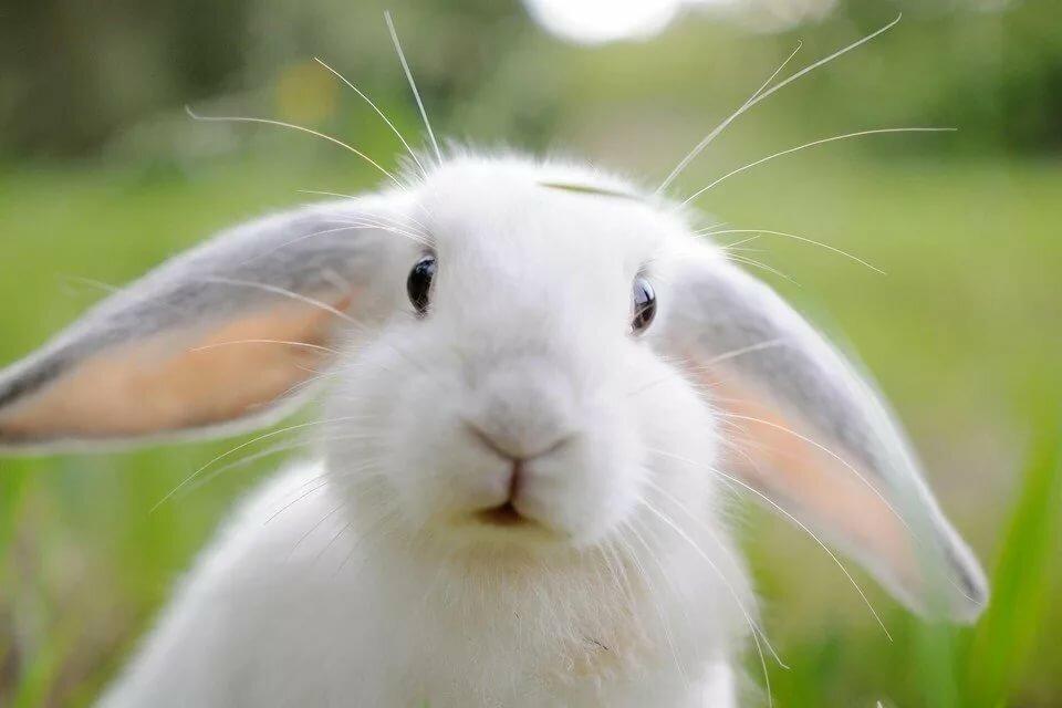 Морда зайца фото