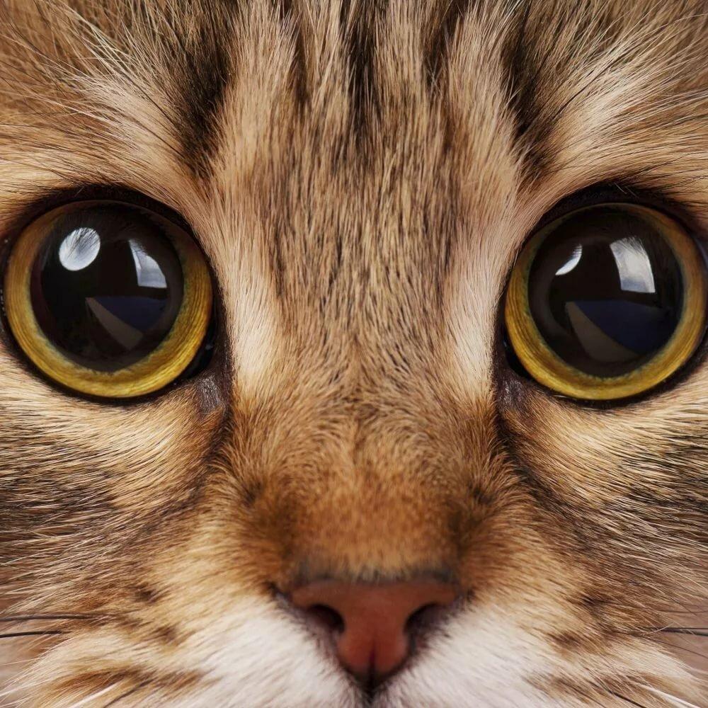 Картинки красивые глаза кошек