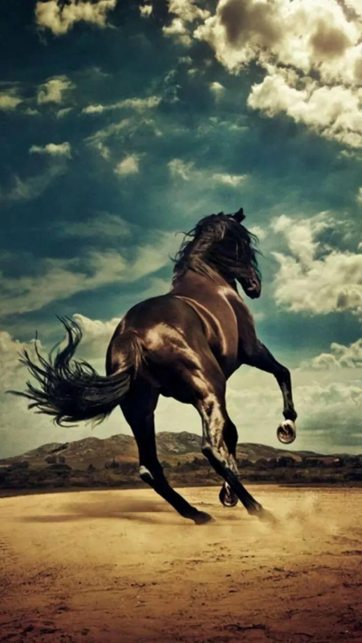 устроить картинка уходящей лошади можно воспроизвести, только