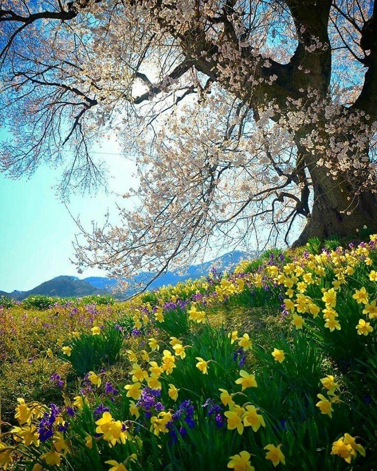 Весенний пейзаж с цветами фото