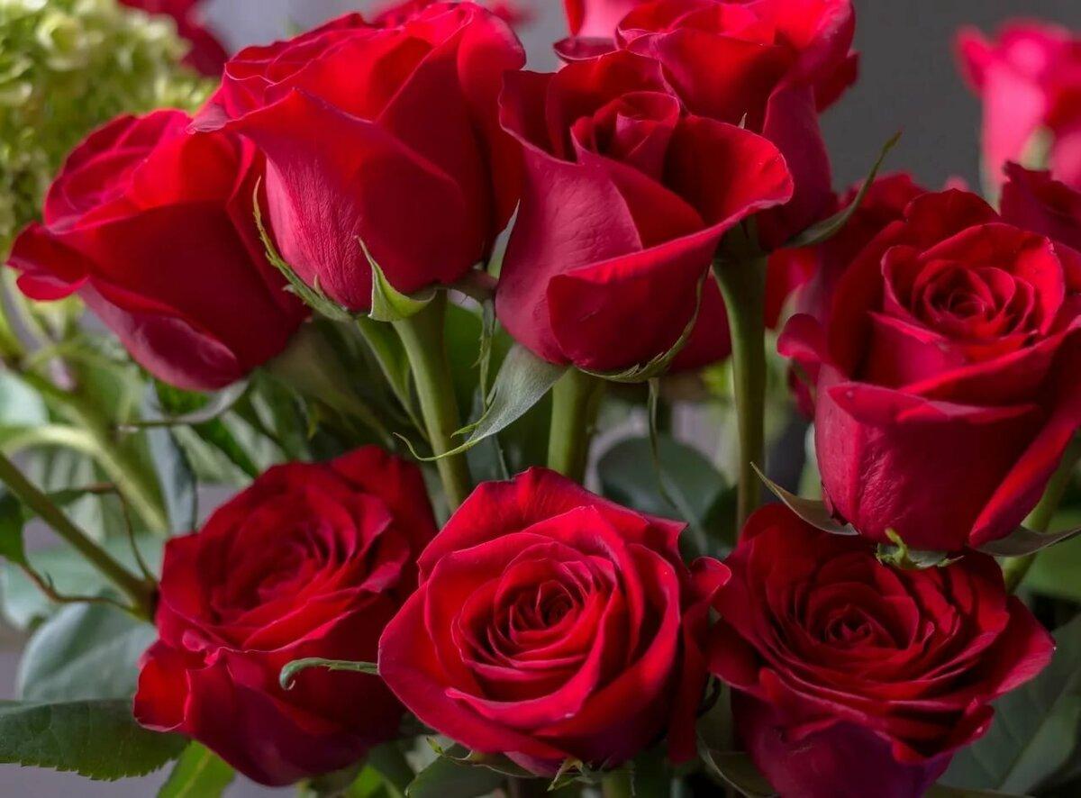 покажите новые розы фото огромное количество людей