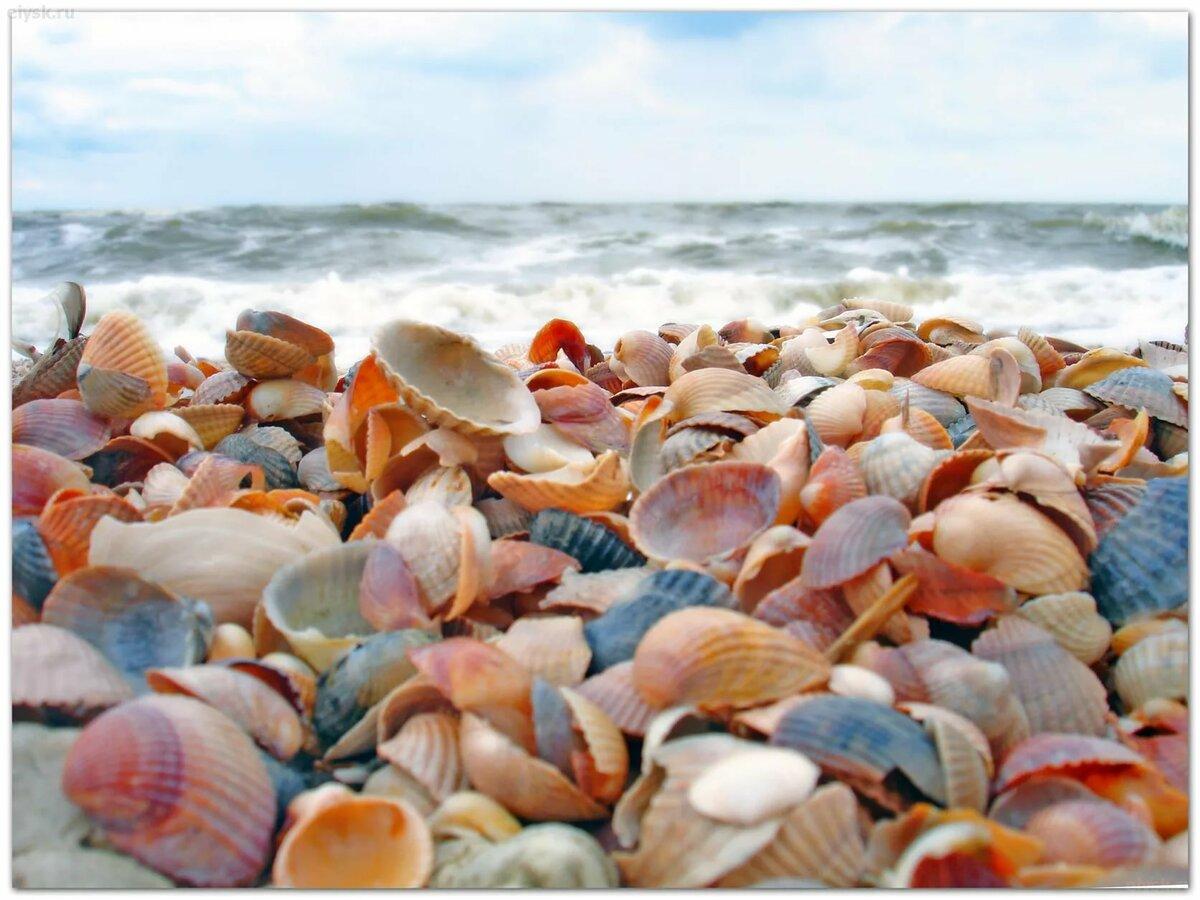 влияет черное море ракушечный пляж фото стала самым