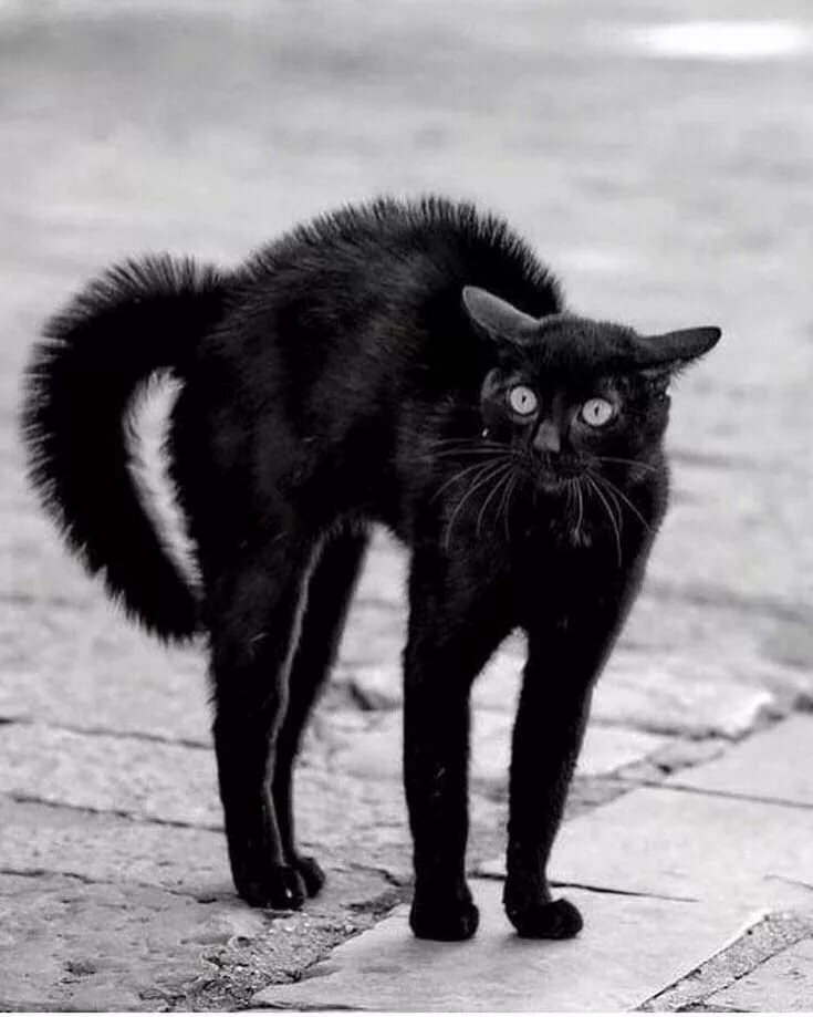 Картинки с черным котиком смешные