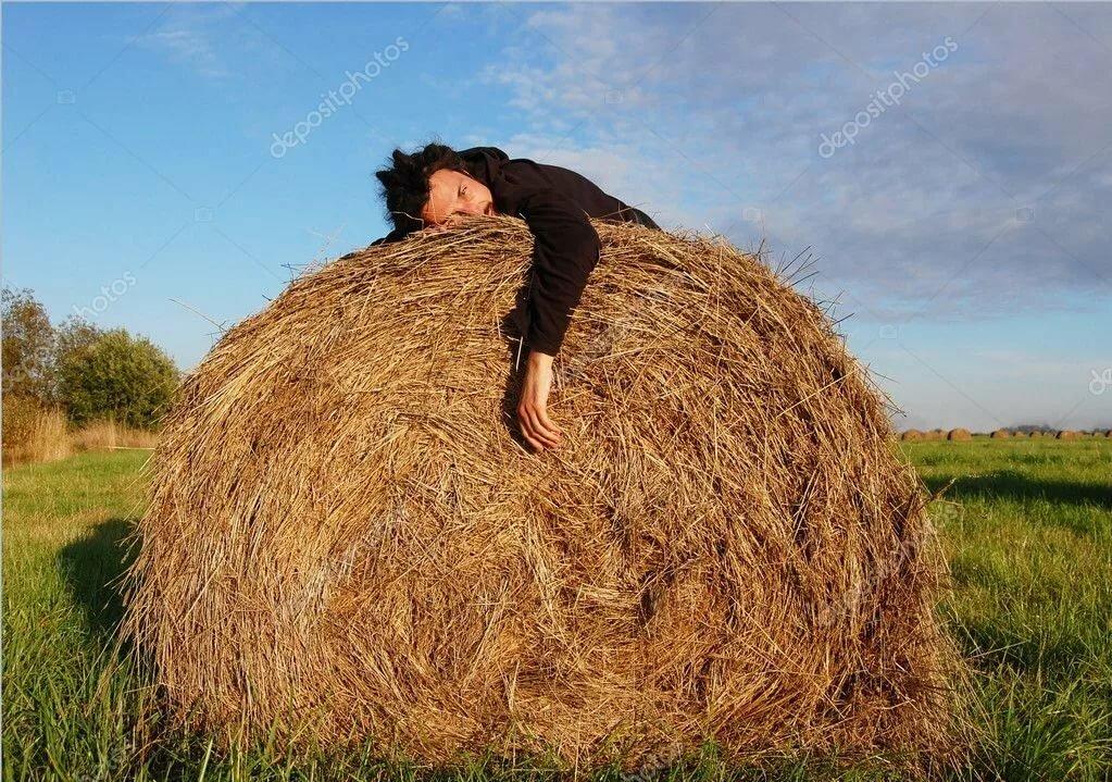 смешное фото мужик на стоге сена палитре