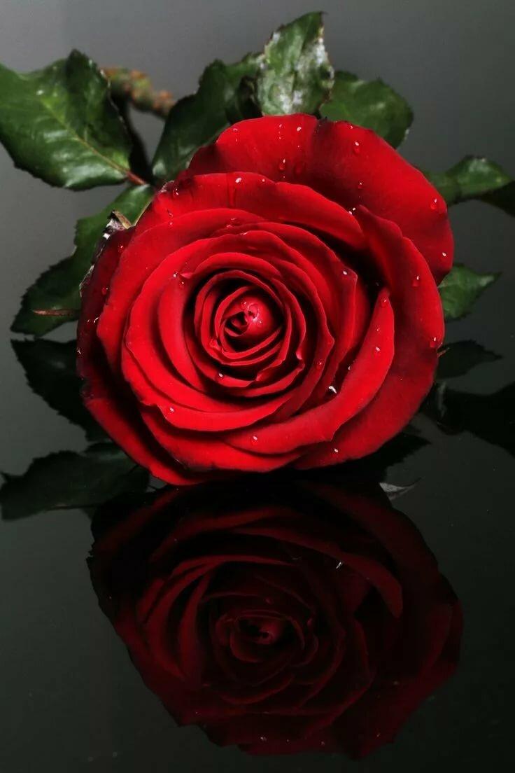 Рюкзак, картинки роза красная анимация