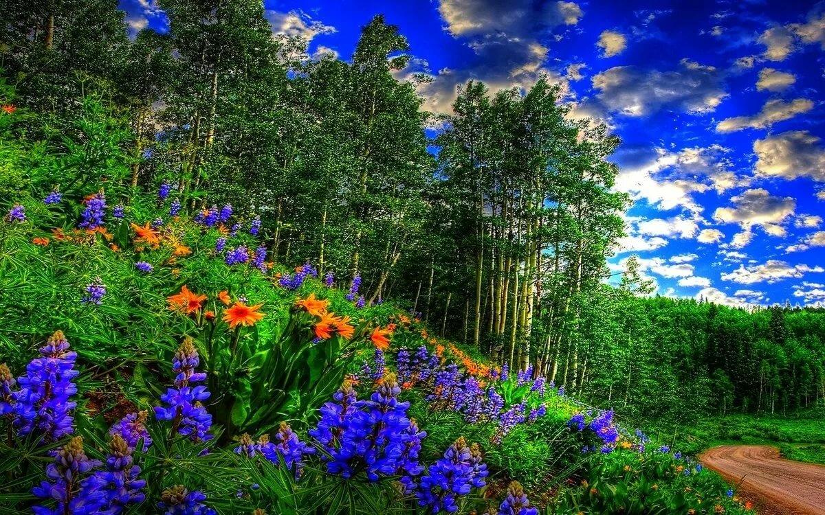 Лес цветы фото на рабочий стол