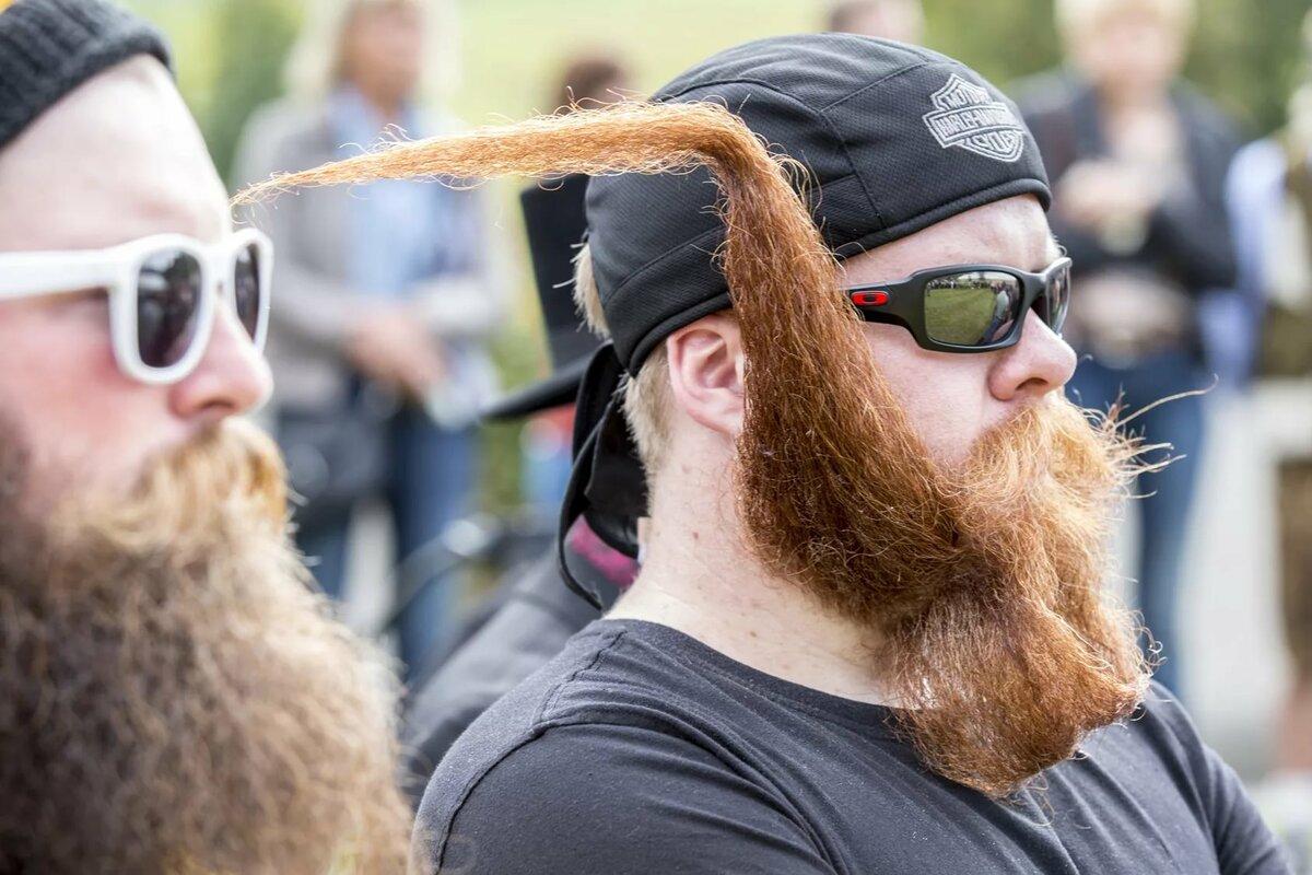 Смешные картинки бородачи