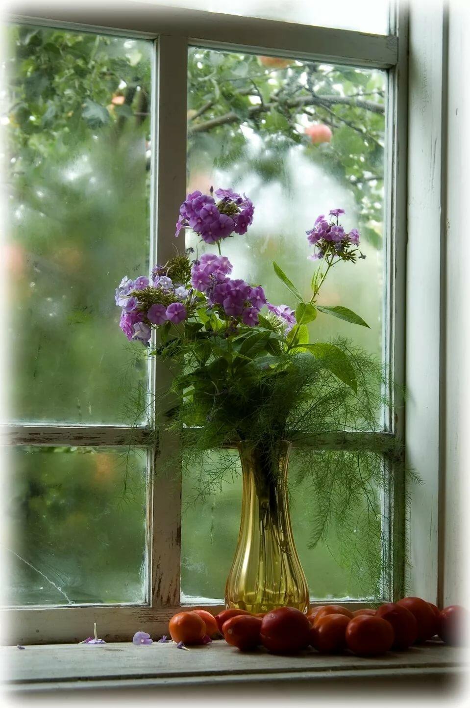 красивые картинки окно с цветами албании русском