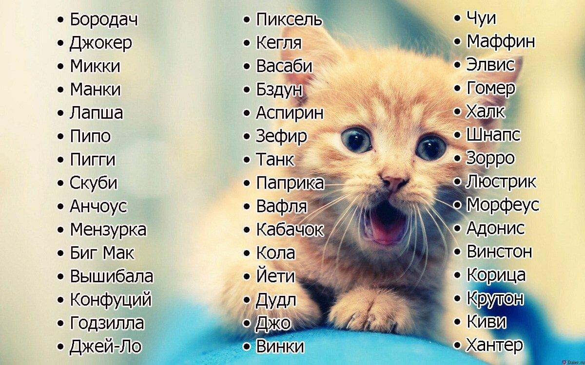 Имена для котов картинки