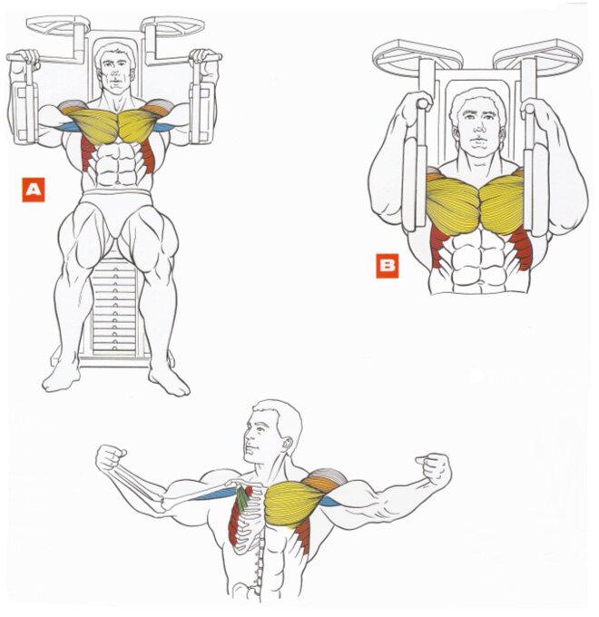 Все мышцы на одном тренажере в картинках