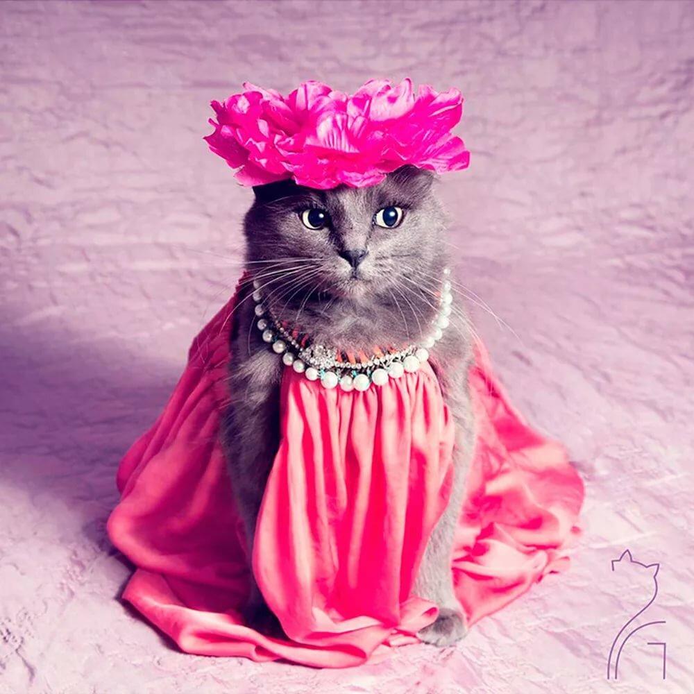 лишая картинки котята в платьях вакцинация щенков