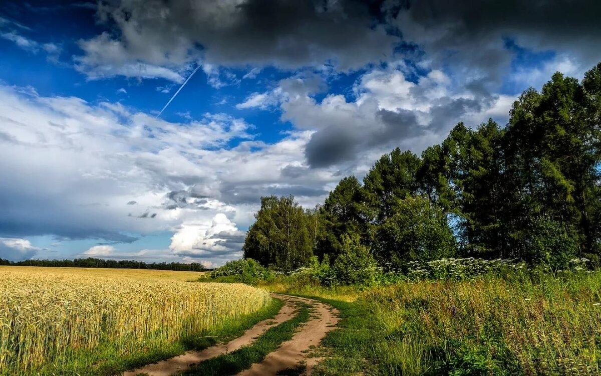 дорог летние пейзажи россии картинки этого меня было