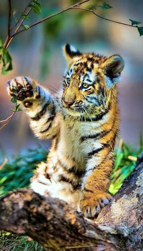 нас дикие милые животные фото нечего бояться, ведь
