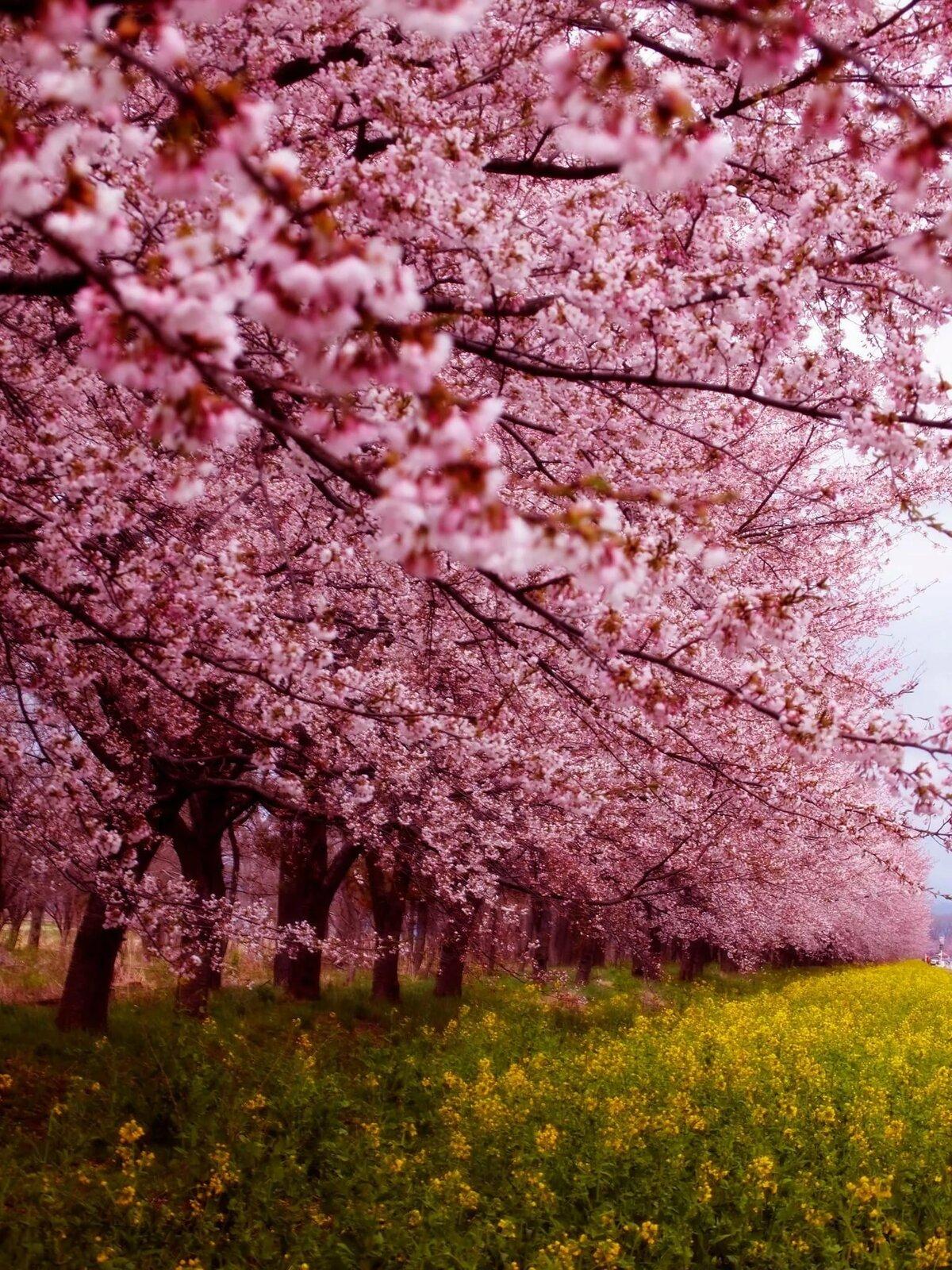 Самая красивая картинка с весною