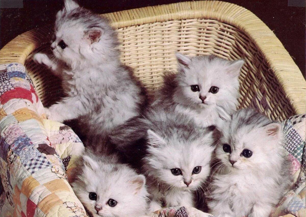 Фото котят счуа