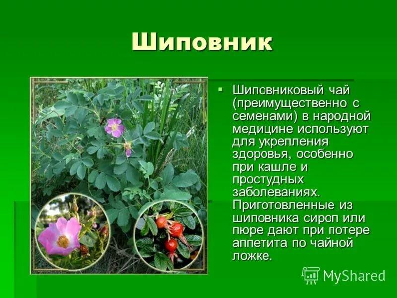 фото лекарственных растений с названиями и описанием домом увидели оборудованную