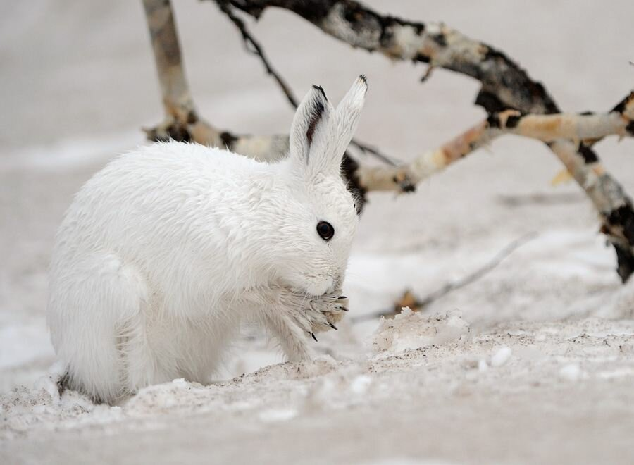 Картинки о зиме о животных зимой
