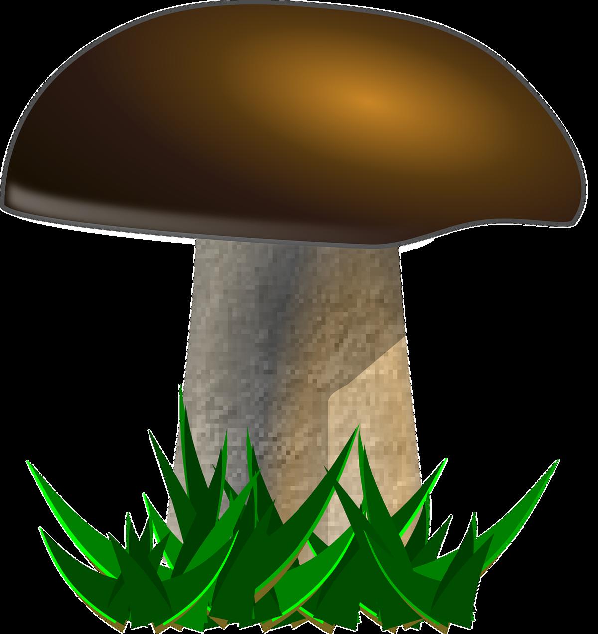 Картинка гриб на белом фоне