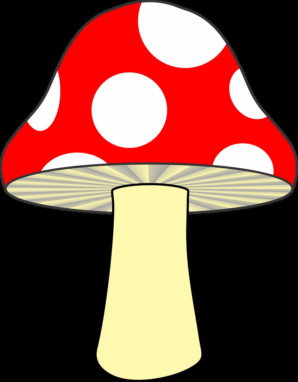 Картинка рисованная гриб