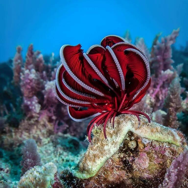 последнее время морские животные австралии картинки нам