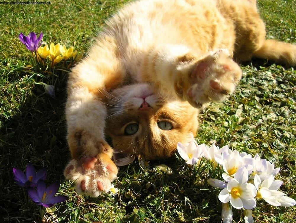 Смешные картинки про весну с животными, картинки прозрачном фоне