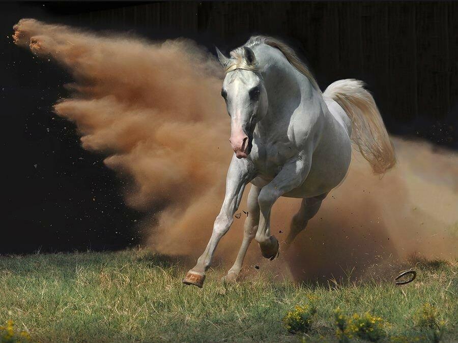 Картинки мчусь как лошадь