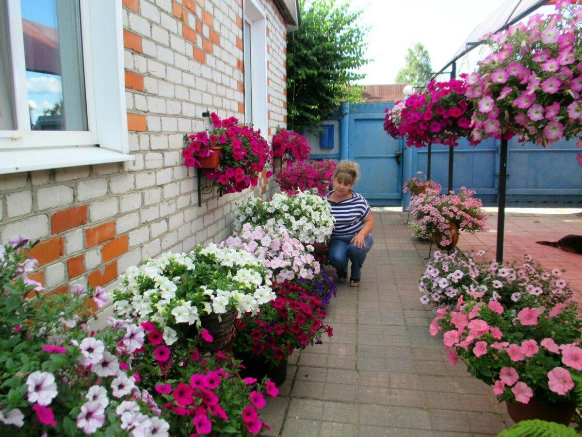 цветы для двора фото необходимо для чистки
