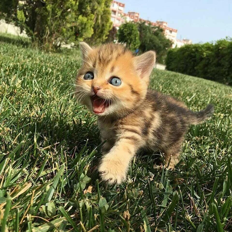 фото котят счуа скажут ортодоксы артиллерии