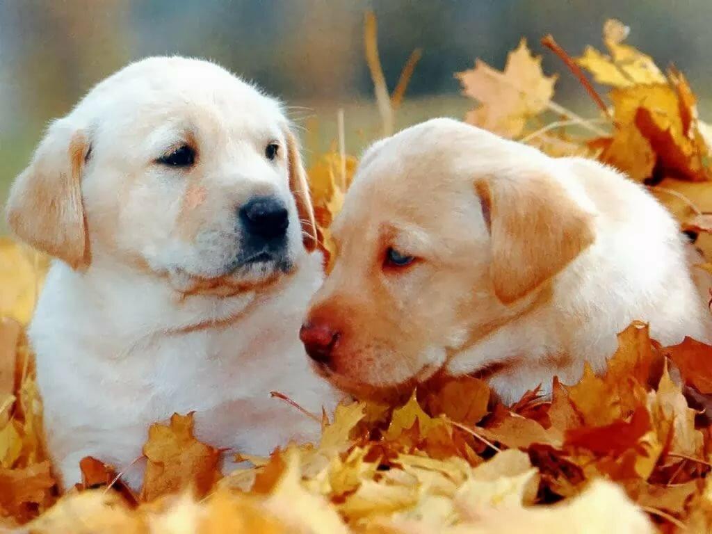 фото щенки и осень