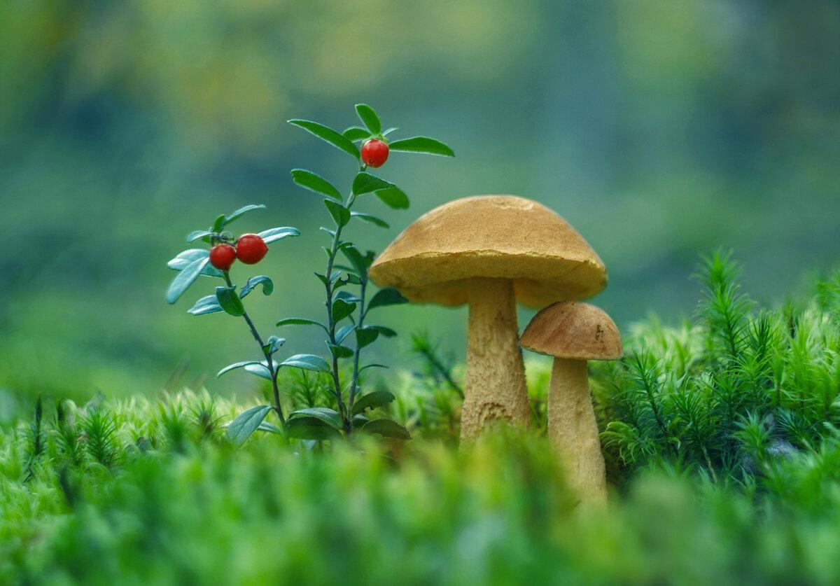 картинка яркого грибами использования