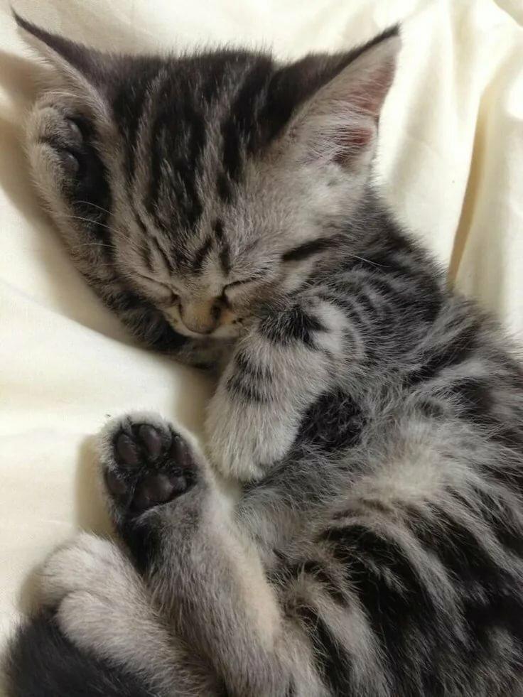 фото спящих котенка украшение