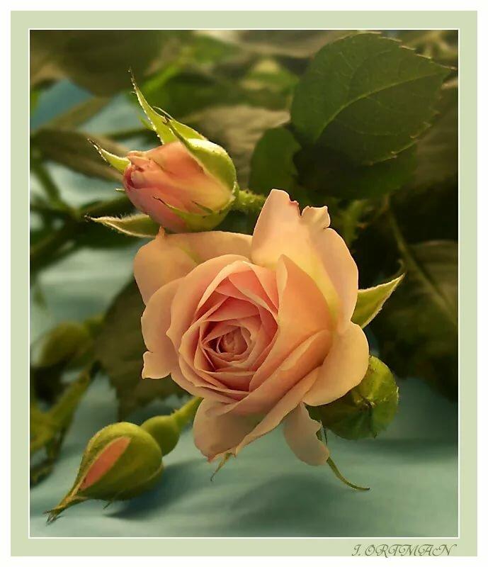 Цветы для ларисы анимация, картинки сердцем картинки