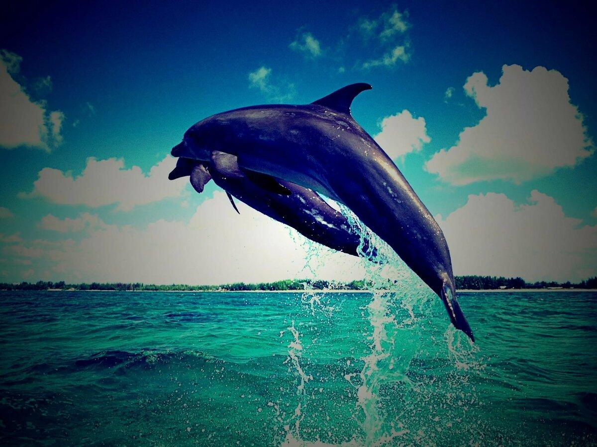 Картинки море и дельфины на телефон, днем