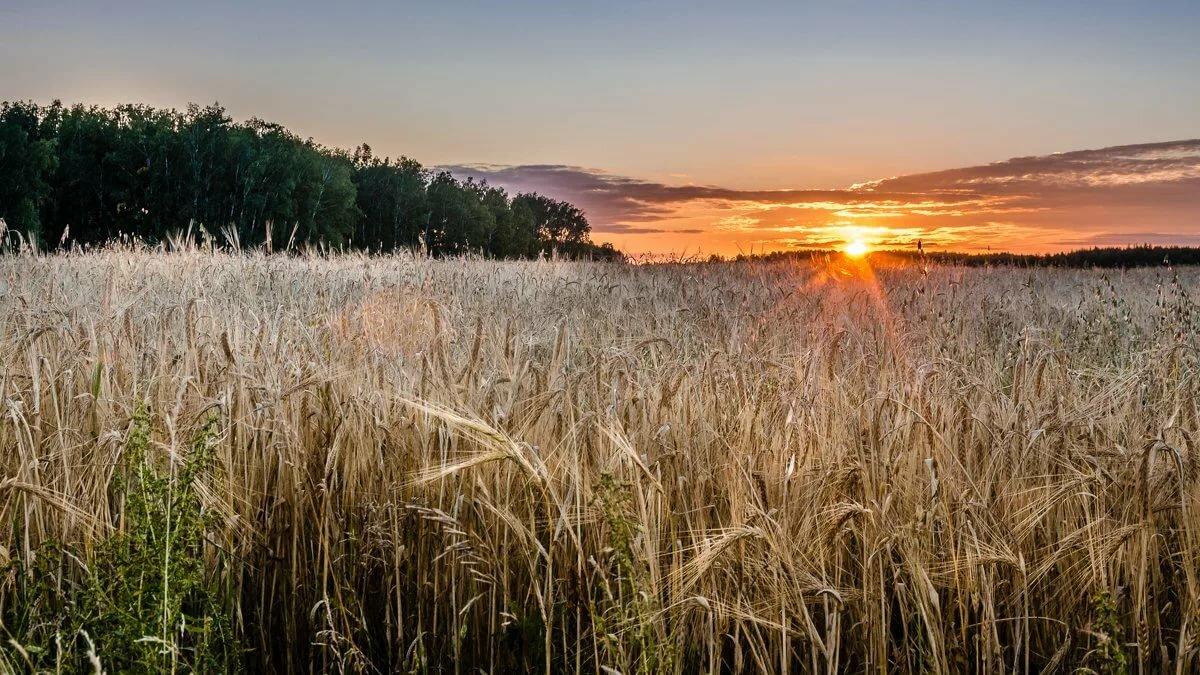 начинать картинка с русским полем радует первые лучи
