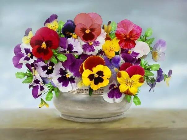 цветы букеты анютины глазки спутниковой