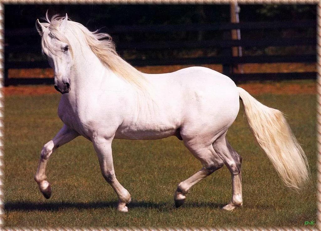 Лошади фото красивые картинки с надписями какая порода, объемные открытки своими