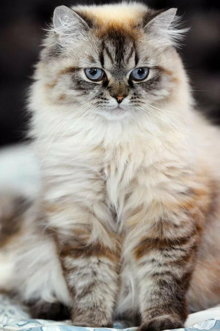 Самые красивые кошки найти фото