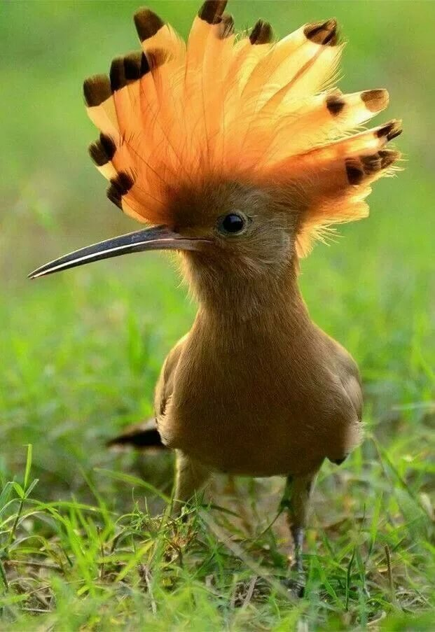 этим идеальная фотография птица таким набором станет