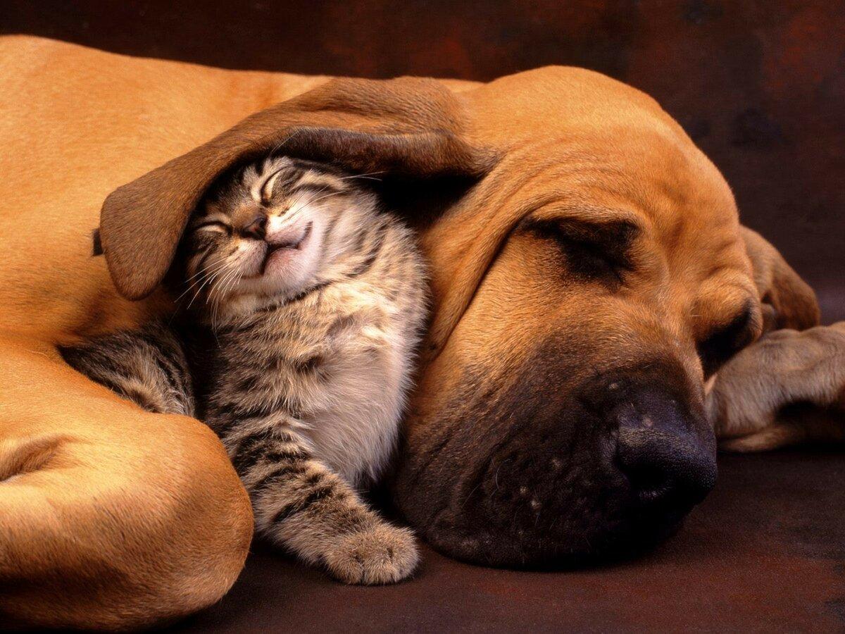 котенок животные дружба HD обои для ноутбука