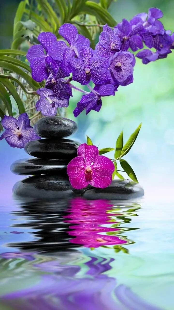 красивые картинки гиф орхидеи успеху