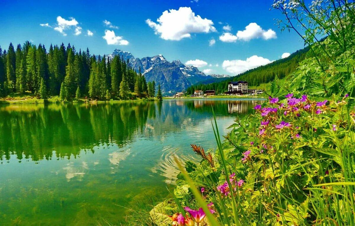 Красивые картинки озеро цветы