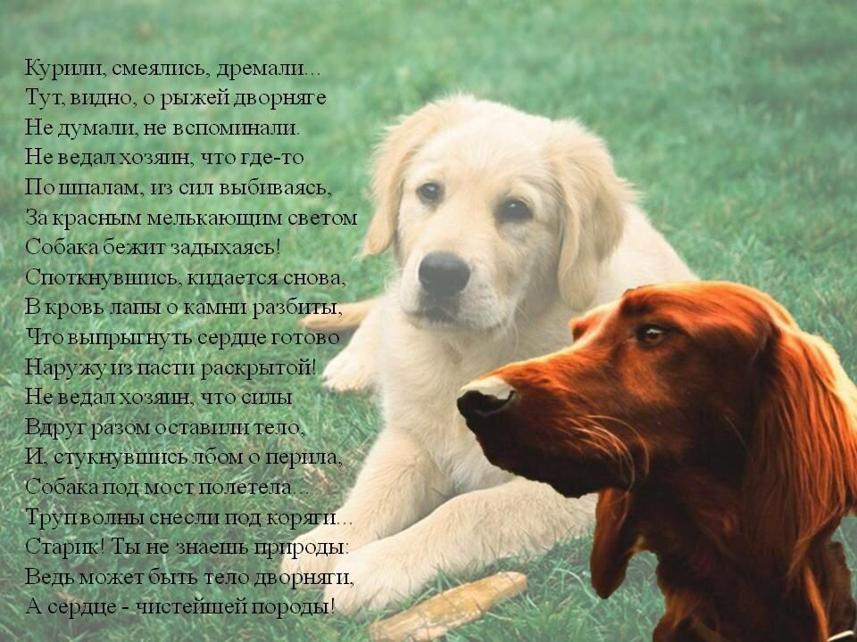 стихи о собачке в картинках мулатки