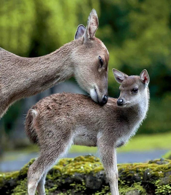 картинки с мамами и детенышами животных лоджии