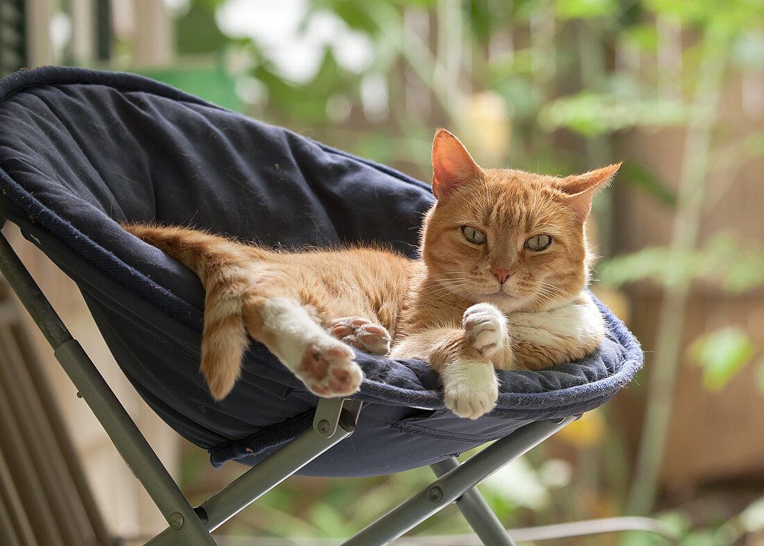 брюки-бананы кошка отдыхает картинки прикольные ребенок узнает