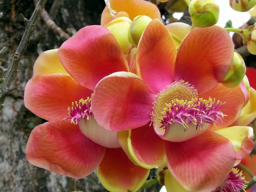 все картинки цветов которые у нас растут теперь потомки легендарных